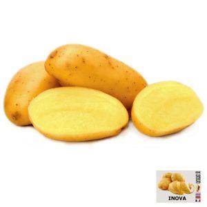 Patata da seme Inova