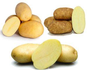 Patate da Semina Olanda, Germania e Belgio