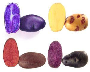 Patate da Seme Viola e Bicolore