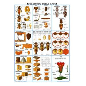 poster il-mondo-delle-api