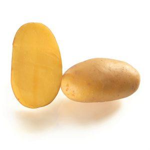 Patata da seme Capucine (Nasturzio)