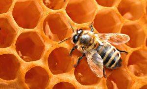 Piccole curiosità sulle Api e il Miele
