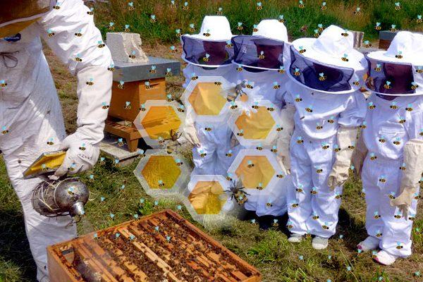 Le api ci insegnano l'immunità di sciame