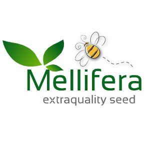 Semi,-Sementi-e-Piante-Mellifere-per-Apicoltura-Semi-di-facelia,-grano-saraceno,-lupinella,-meliloto,-sulla,-trigoglio-resupinato-e-mix-mellifere